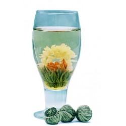 fleur de thé floraison d'amour